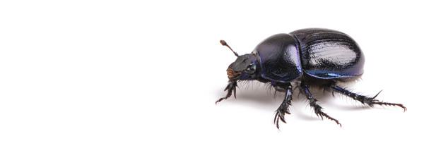 beetle-banner