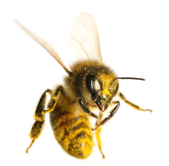 Wasps Vs Bees What Is The Difference Hullternative
